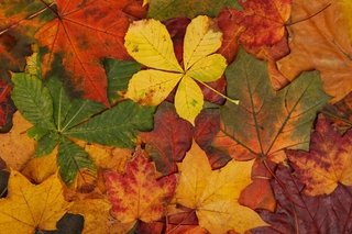feuilles mortes couleurs orangés